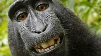 brazen monkey.jpg